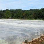 Texinov Filet Protection Insecte Champ